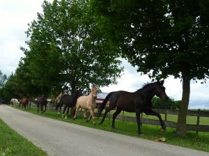 Paardenkudde als perfect team